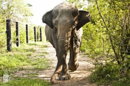 Forum: Please Don't Ride the Elephants with Nancy Jainchill and Nan Tepper @ Woodstock Library | Woodstock | New York | United States